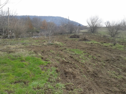 Property cleared and ready for planting.