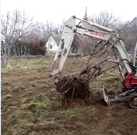 Removing a bush with a backhoe.