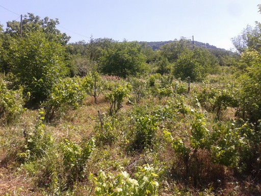 Our first property to be managed. It was somewhat neglected in the past decade, with significant natural invasions of fruit, nut and oak trees.