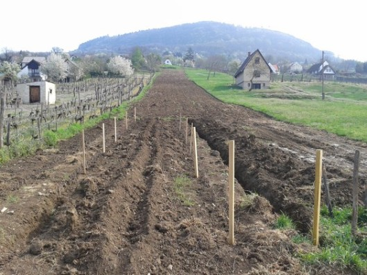 Property 2: Tilled and forground preped for over summer temporary planting of current wine plants.