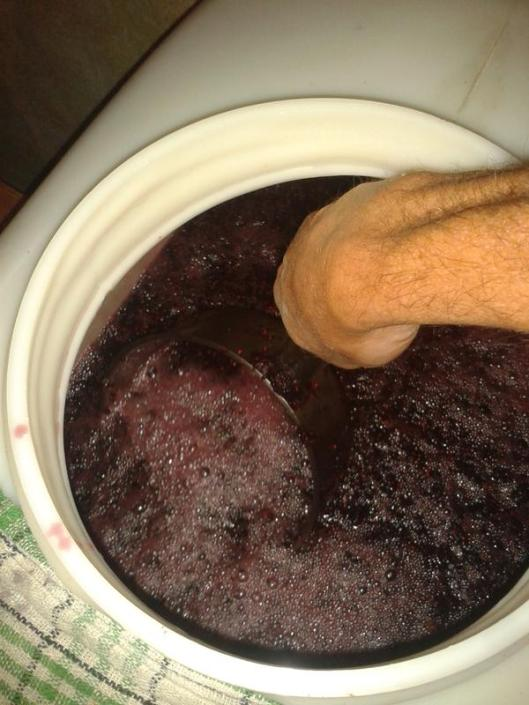 Removing the soaking mulberries and juice from the soaking vat. The towel on the top of the vat is to catch drips during the transfer process.
