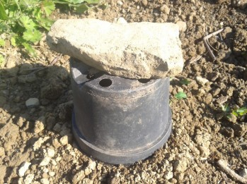 Plastic pot green house. Rock to keep wind from blowing it away.