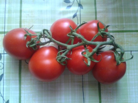 Fresh garden tomatoes.
