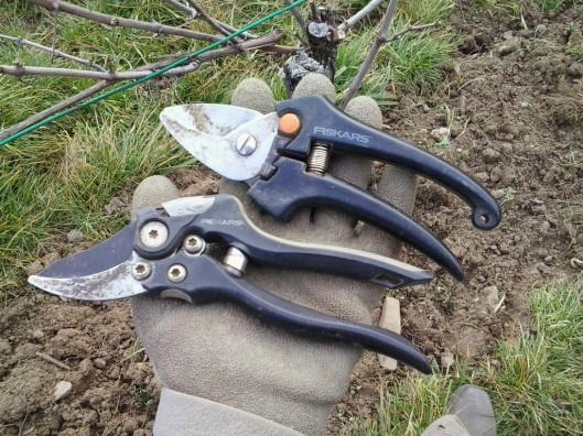 In the belt: Two types of hand pruning shears. One for normal canes, with a weak spring that will not fatigue my hand. And a second multi-leveraged shear for cutting thicker material easily.